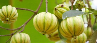 A Complete Overview of Where to Buy Garcinia Cambogia